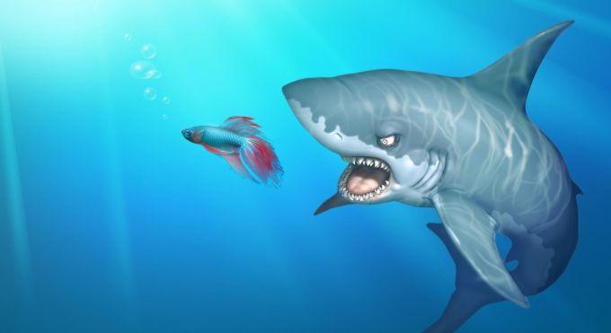 Japan fish stay fresh shark