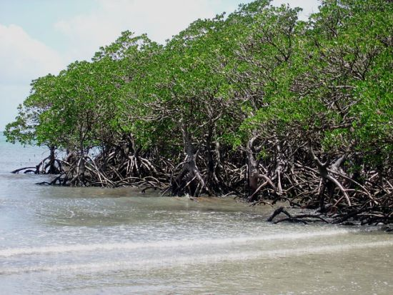 Mangrove Forests of Pakistan