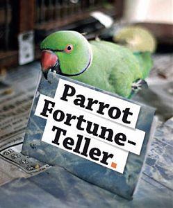 fortune teller parrot