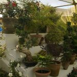 flower show - LDFA 2012 Karachi