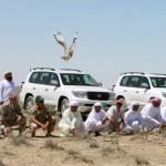 Houbara Bustard: busted beyond measure?