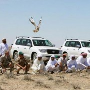 Arabs hunting houbara bustrad in Pakistan