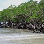 Mangroves Forests in Pakistan